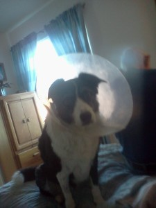 Cone-Head Riley 2
